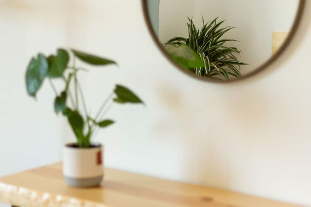Room details with plants showing in the mirror